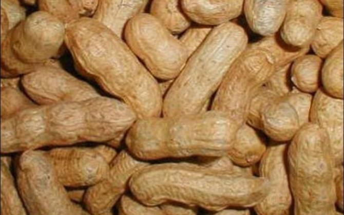 bizcocho de cacahuetes