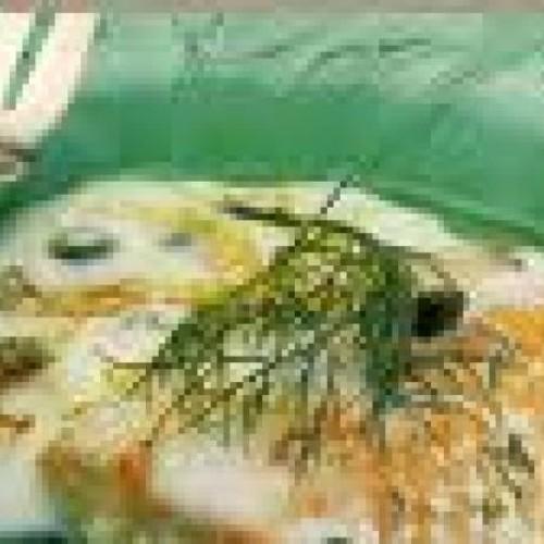 salmon en salsa de alcaparras