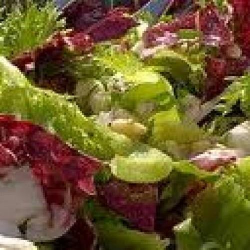 ensalada multicolor con vinagreta de arandanos